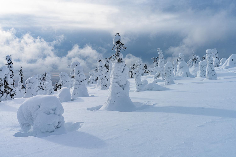 Verschneite Bäume in Winterlandschaft.
