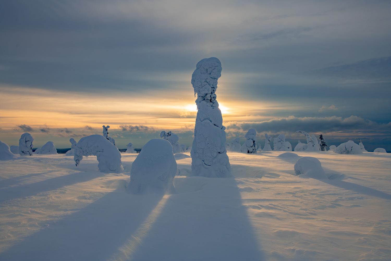 Sonne scheint durch verschneite Bäume, Kuusamo, Finnland.