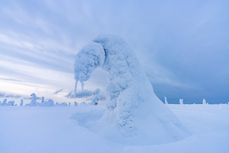 Vereister Baum, Riisitunturi Nationalpark, Finnland
