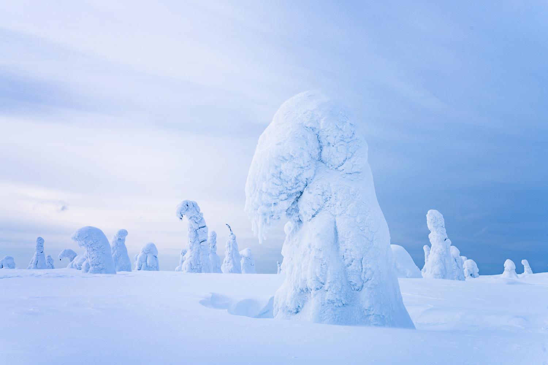 Verschneite Bäume im Riisitunturi Nationalpark, Finnland.